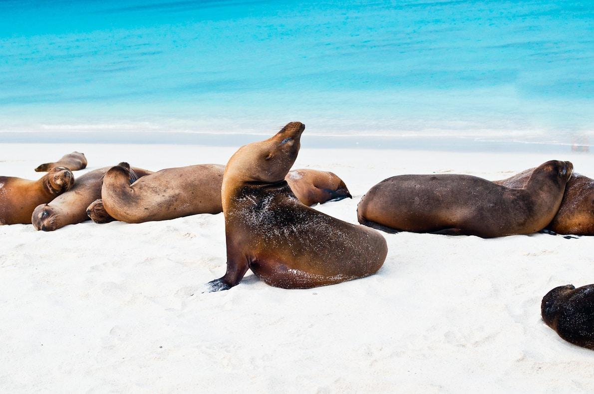 Sea lions gather on the shoreline