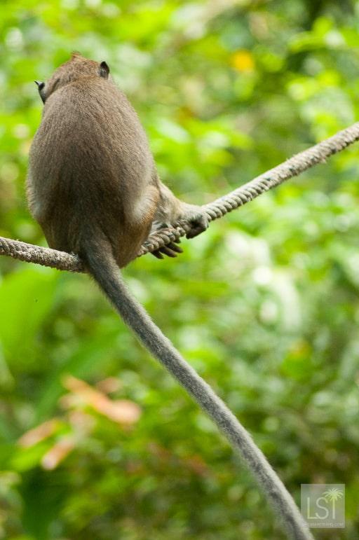 Balancing act - Sabah, Borneo