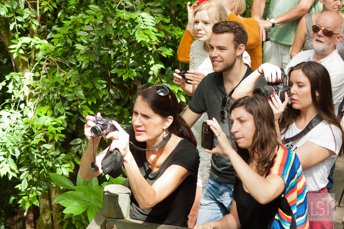 Homo-sapiens, watching the animals on the orangutan island of Borneo