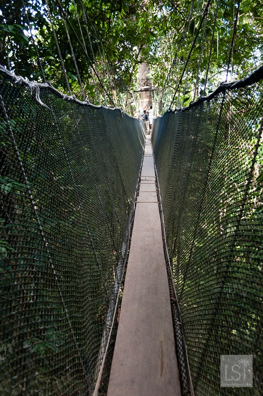 Dare you take the canopy walk at Kinabalu National Park