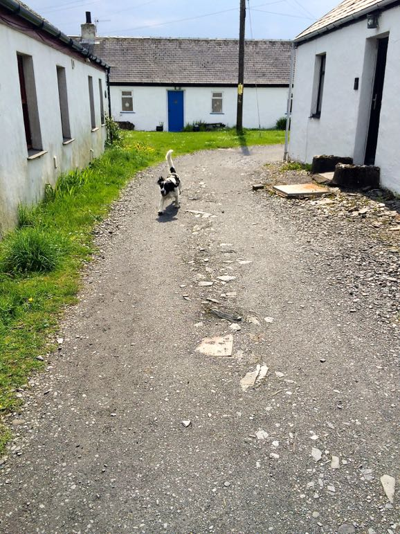 Dog wandering around Easdale