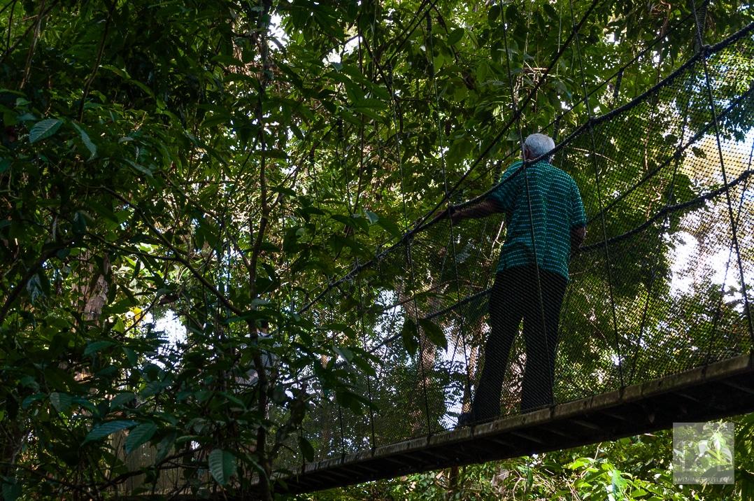 Heading up to the canopy walk - Kinabalu National Park
