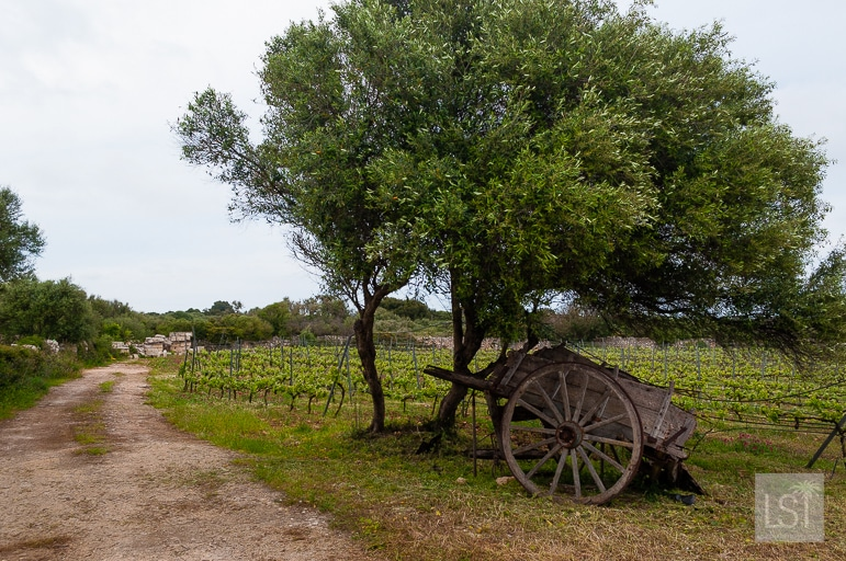 Binifadet Winery in Menorca