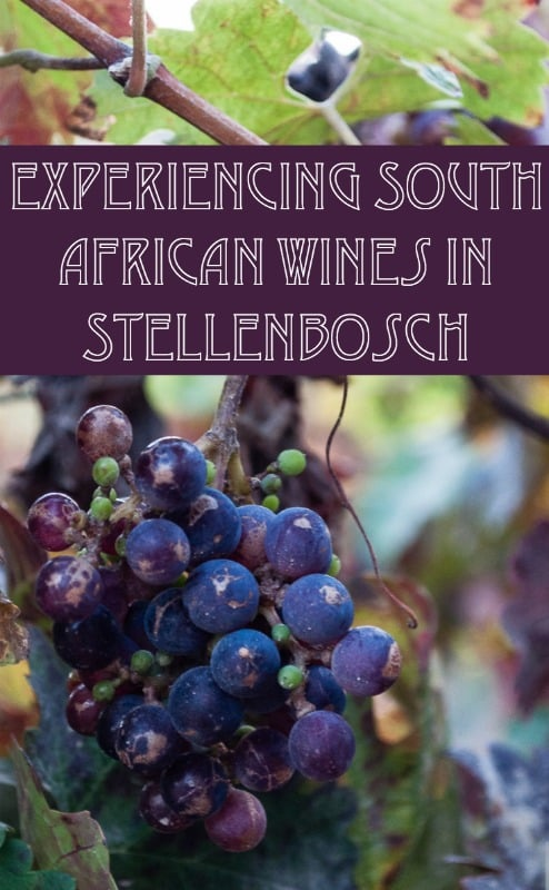 Experiencing South African wines in the wineries of Stellenbosch