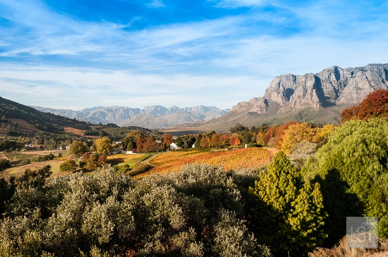 Stellenbosch is one of the finest South African wine regions