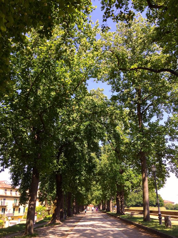 Things to do in Tuscany - walk Lucca's walls