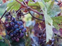 Grow it, blend it, taste it – experiencing South African wine at Stellenbosch wineries