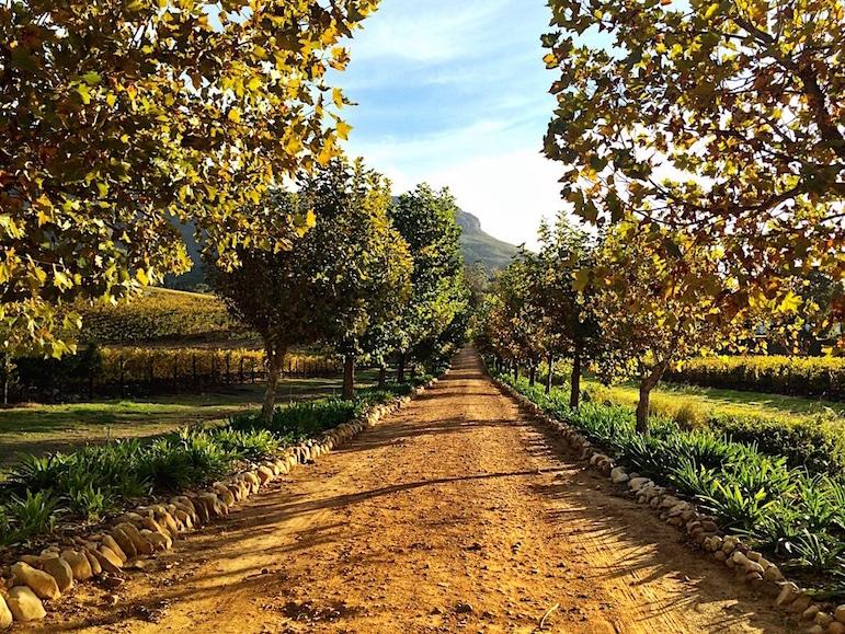 Stories of wine at Stellenbosch wineries