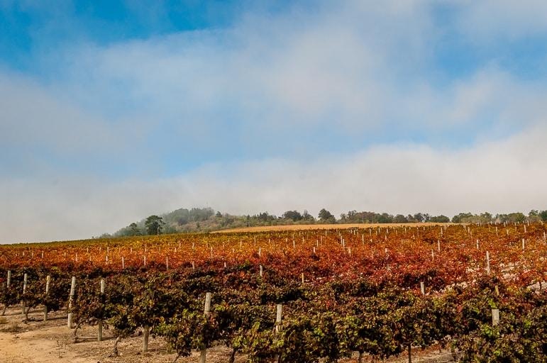 Tales of Stellenbosch wineries - Jordan Wine Estate