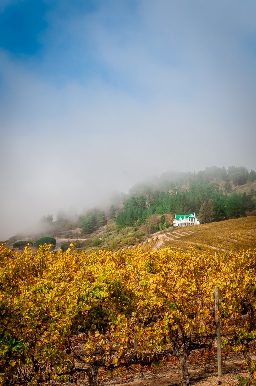 Tales of Stellenbosch wineries - mist rising over Jordan Wine Estate