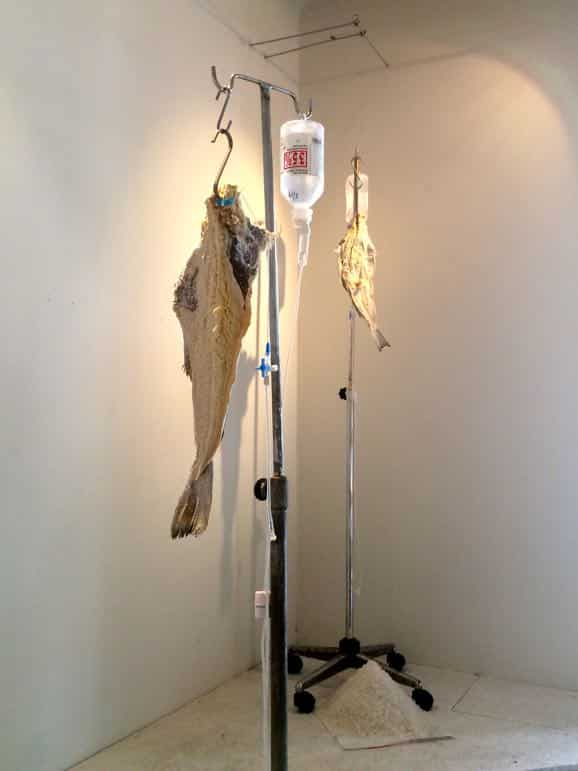 Salted fish on a saline drip at the Gastronomy Museum, Athens