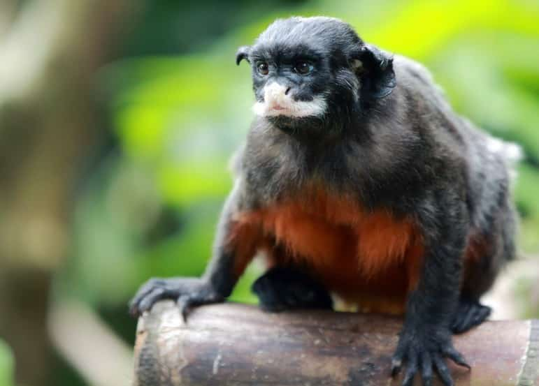 Places to go in Singapore - visit the animals at Singapore Zoo | pic: Nils Axel Braathen