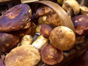 In season porcini mushrooms in San Sebastian