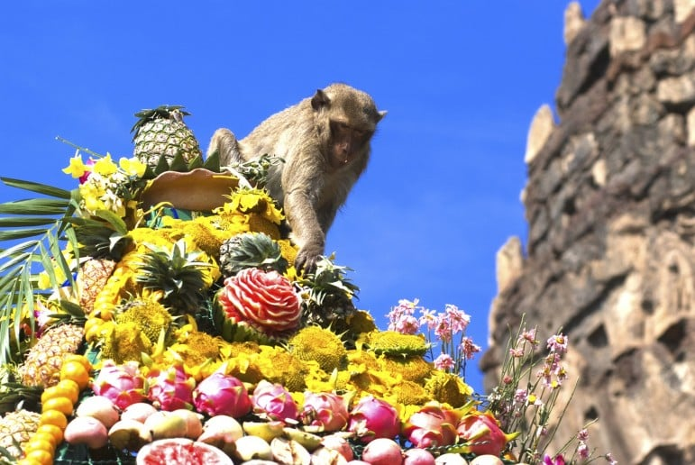 The Monkey Buffet Festival is one of the most obscure and most unmissable events in the world | Pic: Fest300