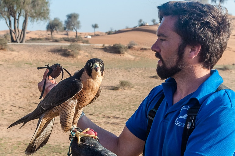 Falconry show at the Banyan Tree Al Wadi Resort