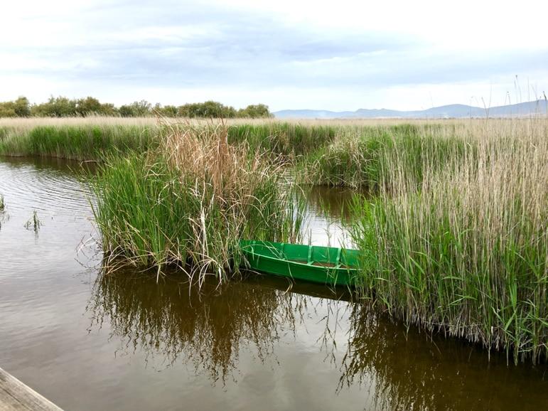 Boat among the reeds in Tablas de Daimiel in La Mancha, Spain