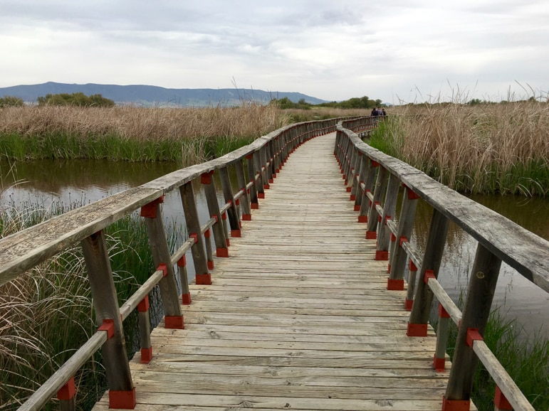 Following the trail through Tablas de Daimiel in La Mancha, Spain