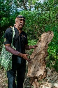 Melbourne to the Great Ocean Road itinerary - Paul shows us bark from the paper tree at Tower Hill