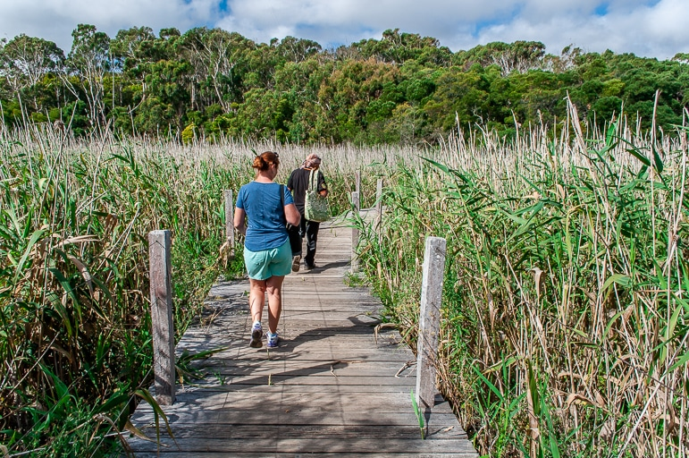 Melbourne to the Great Ocean Road itinerary - a bush walk through the reeds at Tower Hill