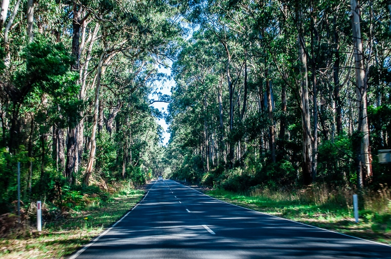 Melbourne to the Great Ocean Road itinerary -driving through the Great Otway National Park