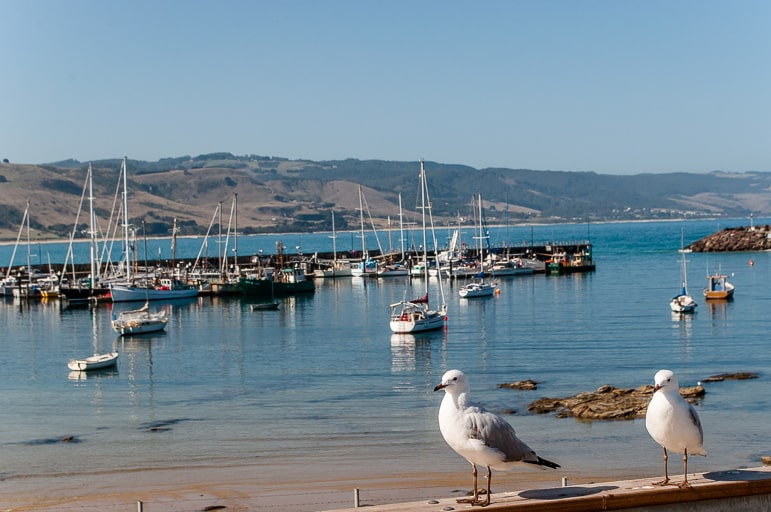 Melbourne to the Great Ocean Road itinerary - seagull spotting in Apollo Bay