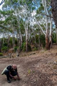 Melbourne to the Great Ocean Road itinerary - searching out witchetty grubs