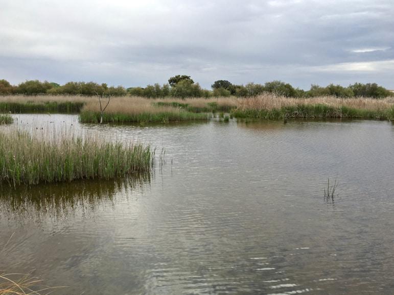 The Guadiana River in Tablas de Daimiel in La Mancha, Spain