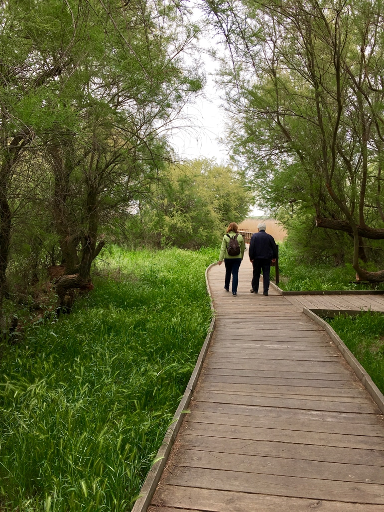 Walking through Tablas de Daimiel in La Mancha, Spain