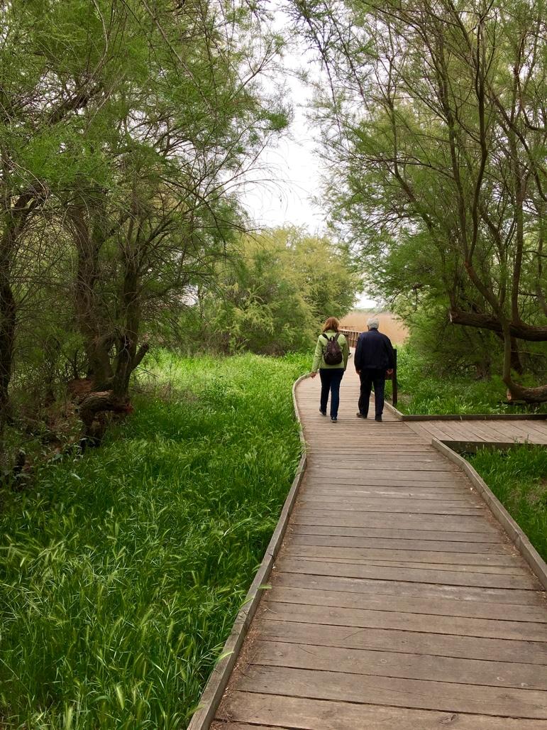 Walking through Tablas de Daimiel in La Mancha, Spain