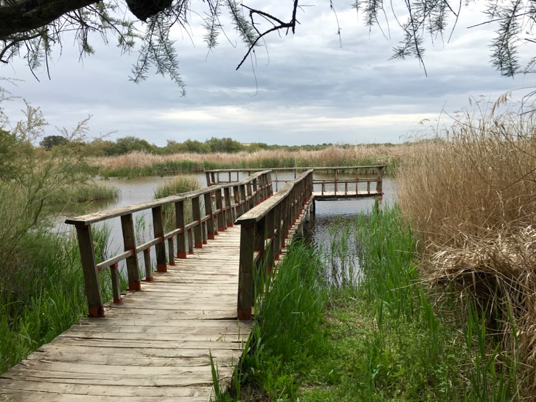 Wetland setting in Tablas de Daimiel in La Mancha, Spain