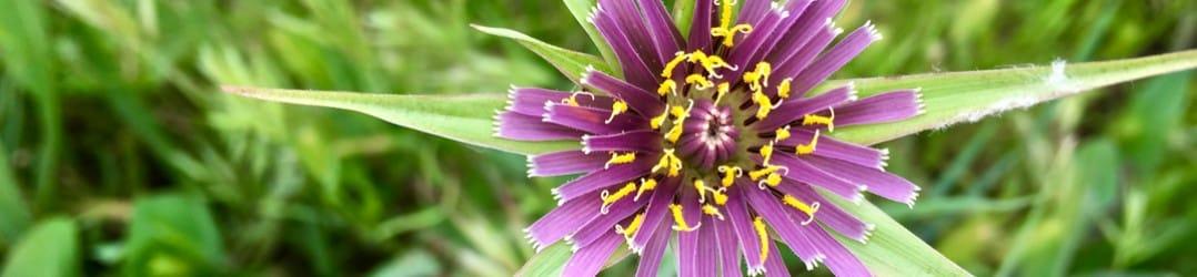 Wildflower at Tablas de Daimiel in La Mancha, Spain