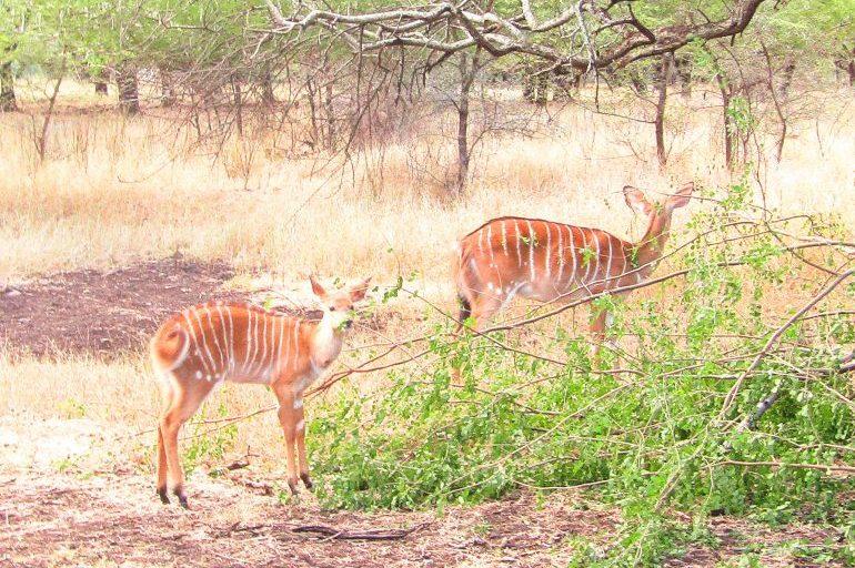 Deer at Casela Nature Park