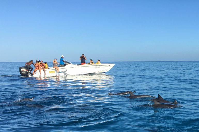 Dolphin watching in Mauritius where they can be spotted in one of four bays and you can go swimming with wild dolphins too