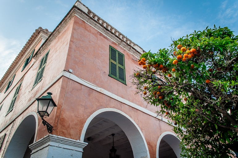 Orange trees in Ciutadella, Menorca