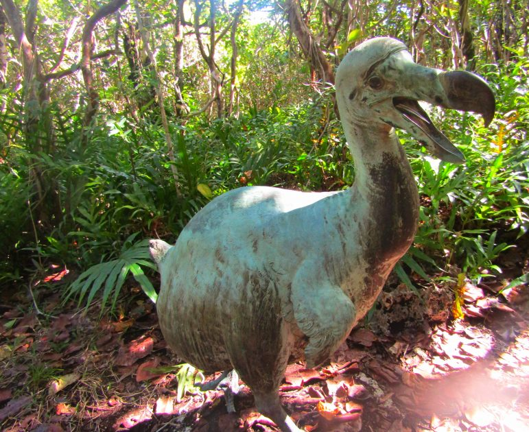 The dodo statue in the nature reserve, the national bird of Mauritius and much remains unknown about this mysterious bird