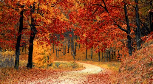 7 of the best places to fall in love with this autumn
