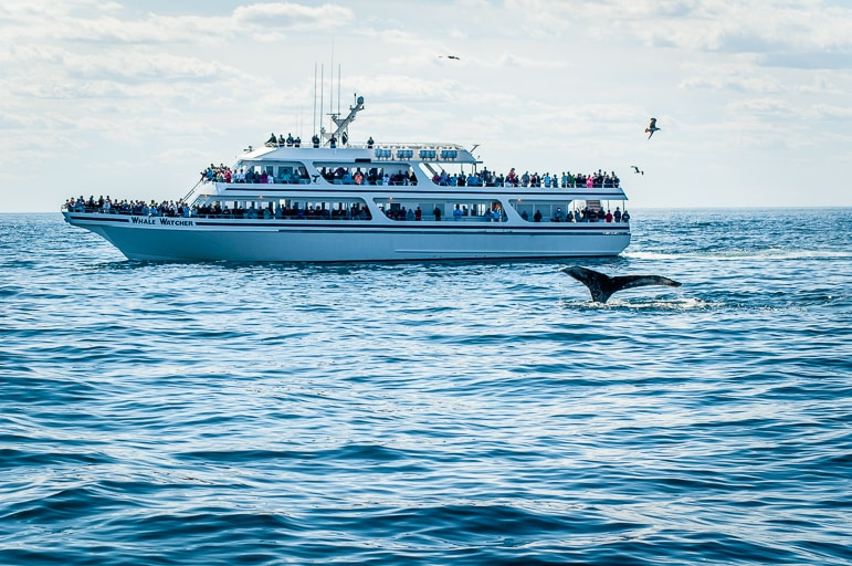 Whale watching tour in New England