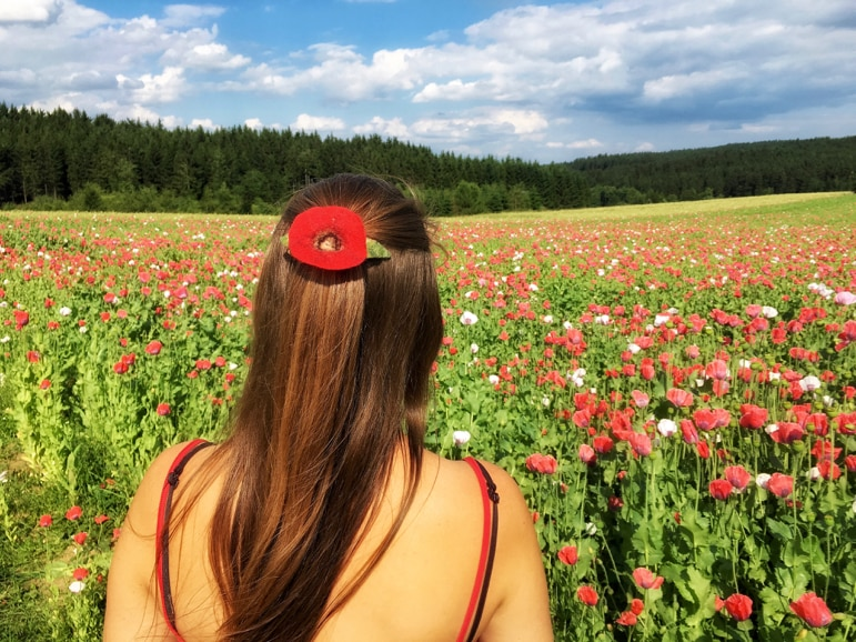 Poppies in the hair not just the fields Waldviertel