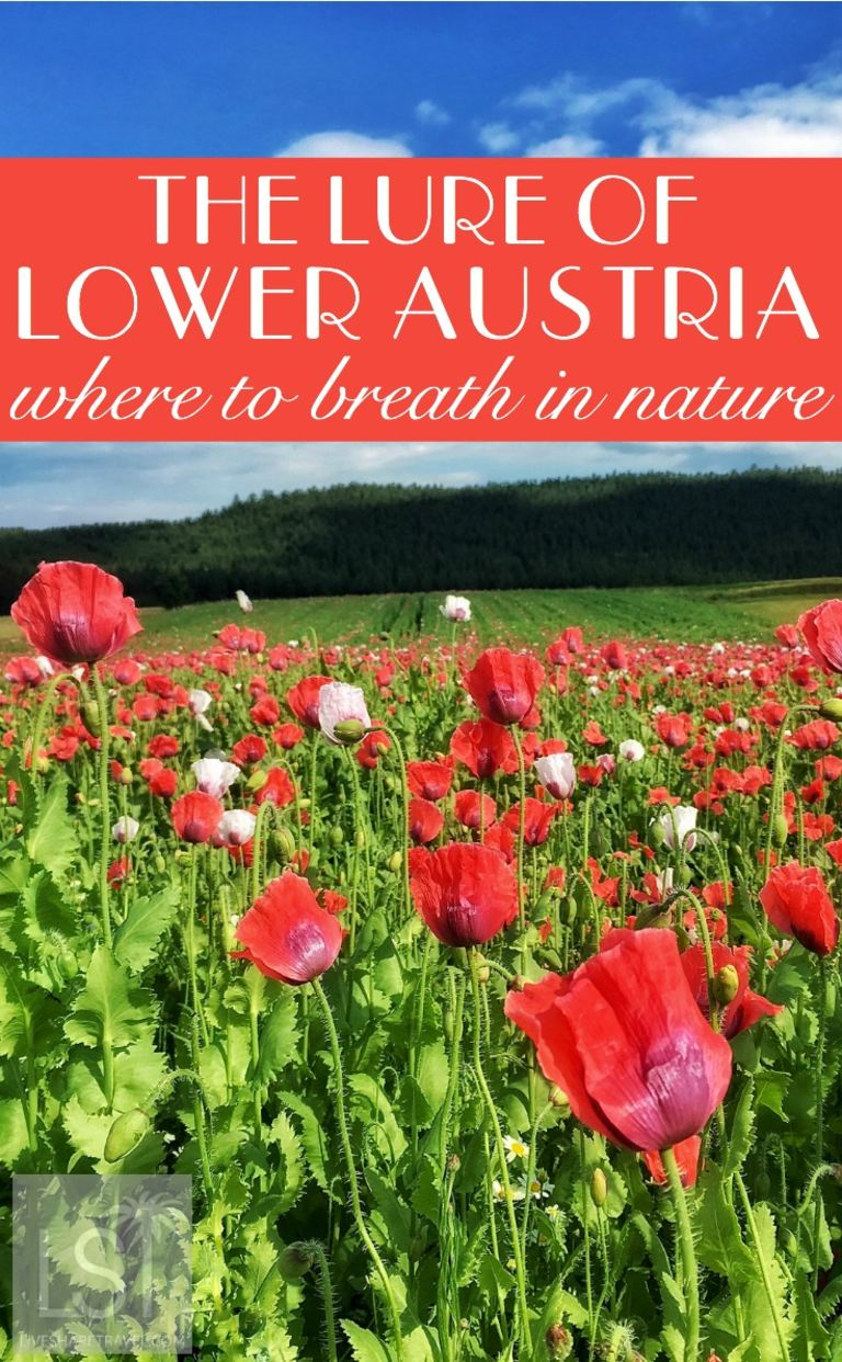 The lure of Lower Austria, where to breathe in nature near Vienna