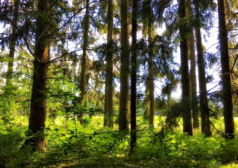 Waldviertel, Lower Austria's wood quarter has extensive forests