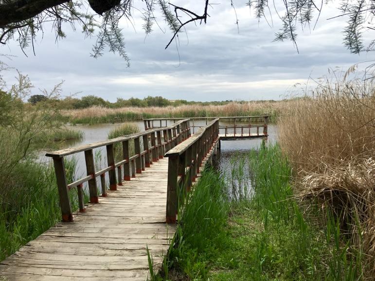Wetland setting in Tablas de Daimiel in La Mancha, Spain