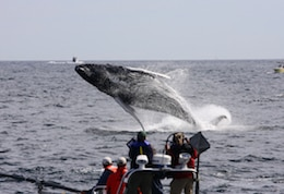 Whale watching in Massachusetts