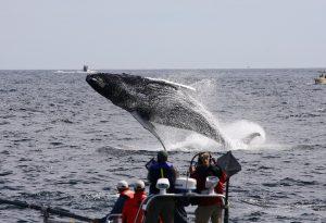 MASSACHUSSETTS: Whale watching