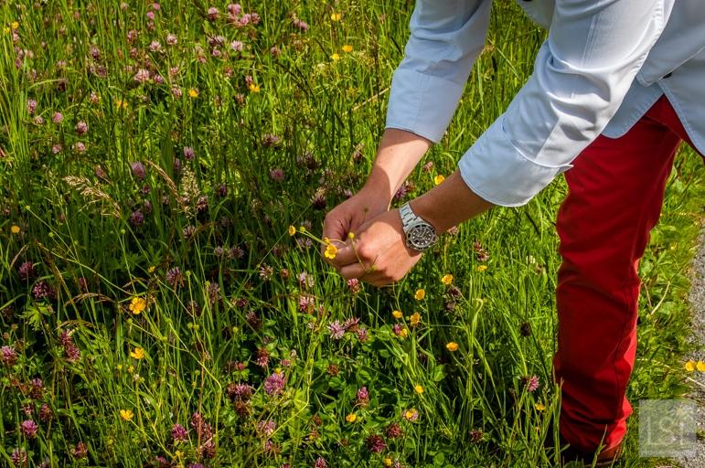Choosing ingredients from the herb garden