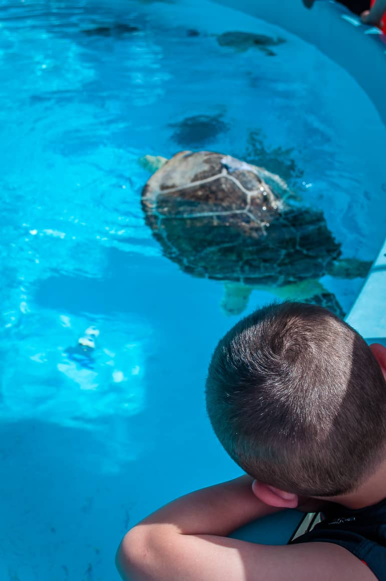 Unusual things to do in the Florida Keys - the Turtle Hospital rehabilitates the animals and teaches us about them