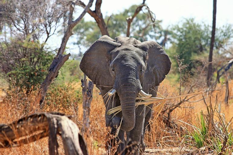 2017 best travel destinations - elephant, south africa