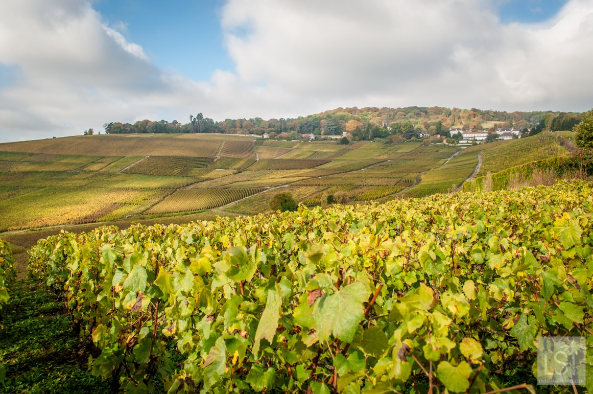 The Champagne region of France is a UNESCO World Heritage location