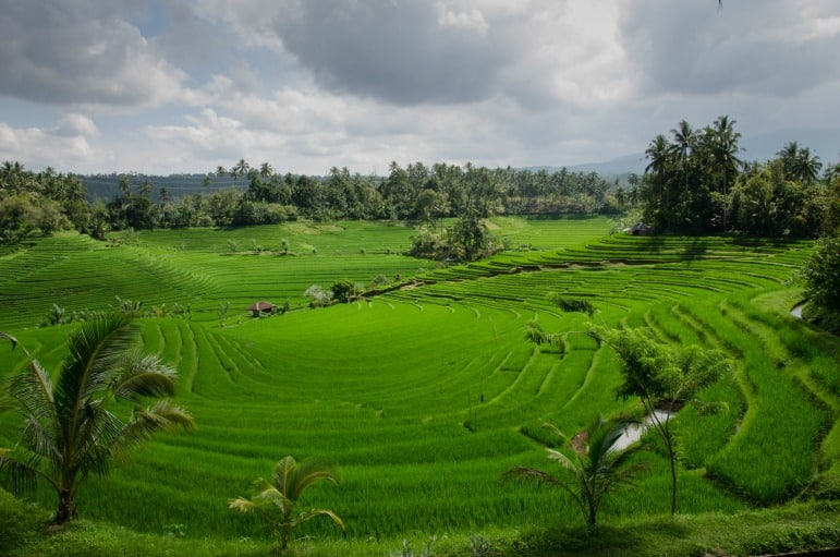Spa treatments - Indonesian rice paddies in Bali