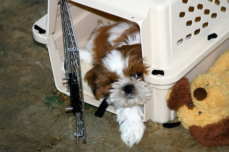 Wonton in his crate | pic: Jim Winstead