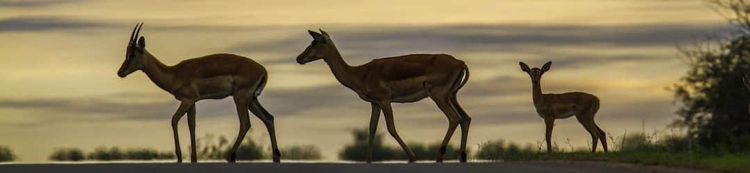 Africa's big five - spotting animals at Kruger National park